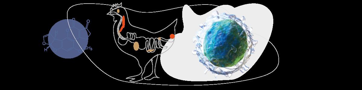 Inmunopupresion
