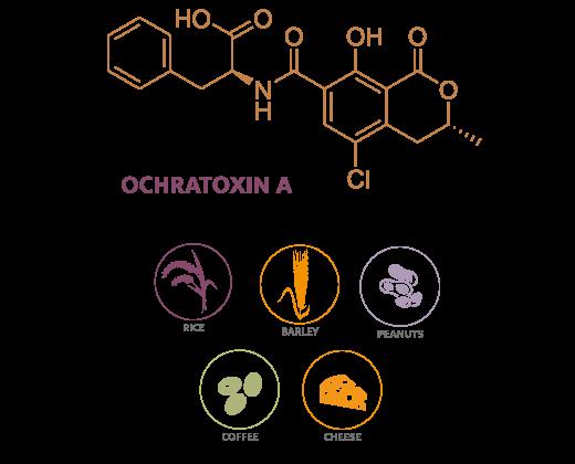 OCHRATOXIN